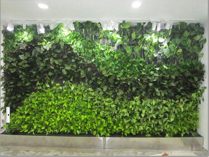 室内植物墙 植物的选择