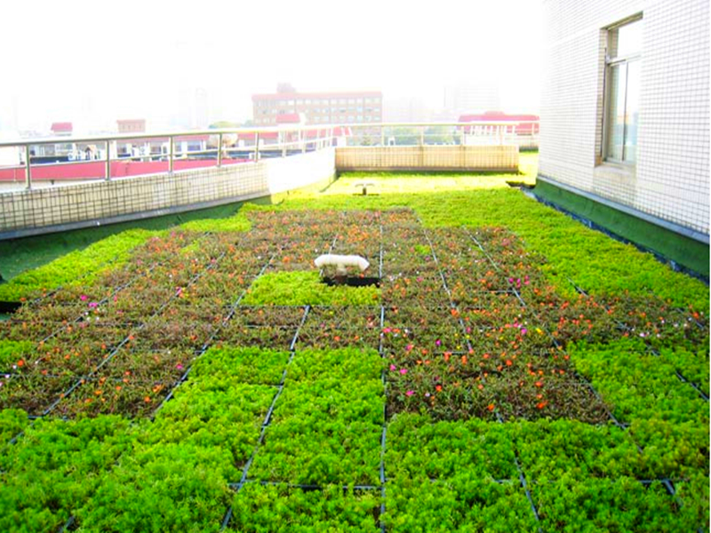 Thin layer of green roof